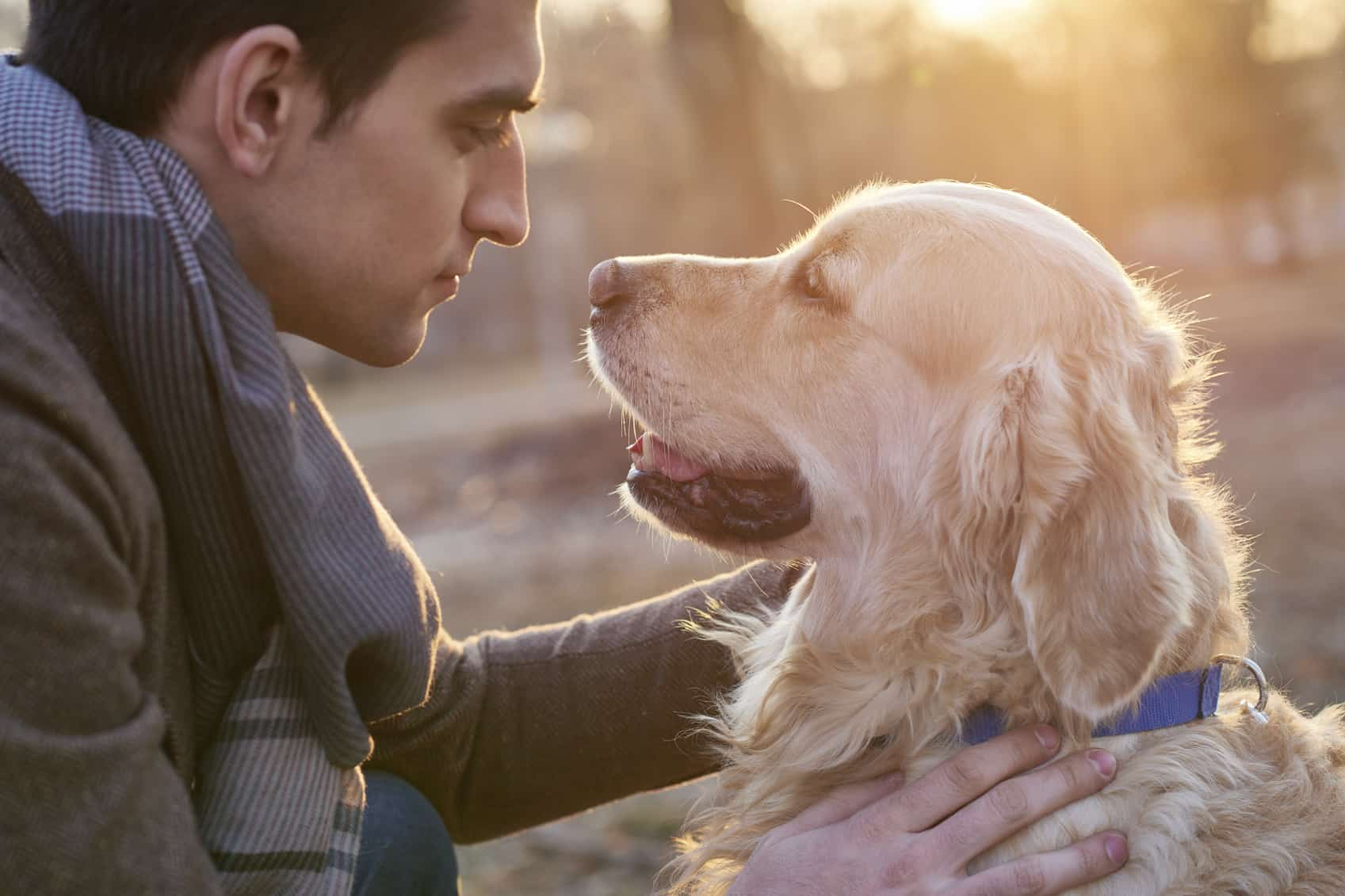 Young man stroking golden retriever in the park