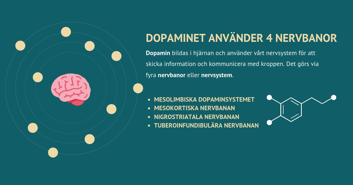 Dopaminet använder 4-nervbanor Axelsons.se
