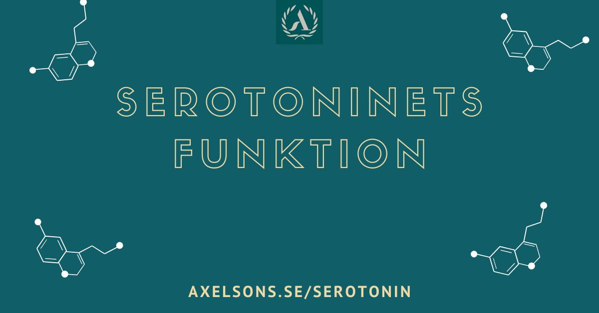 Serotoninets funktion i kroppen (seratonin)