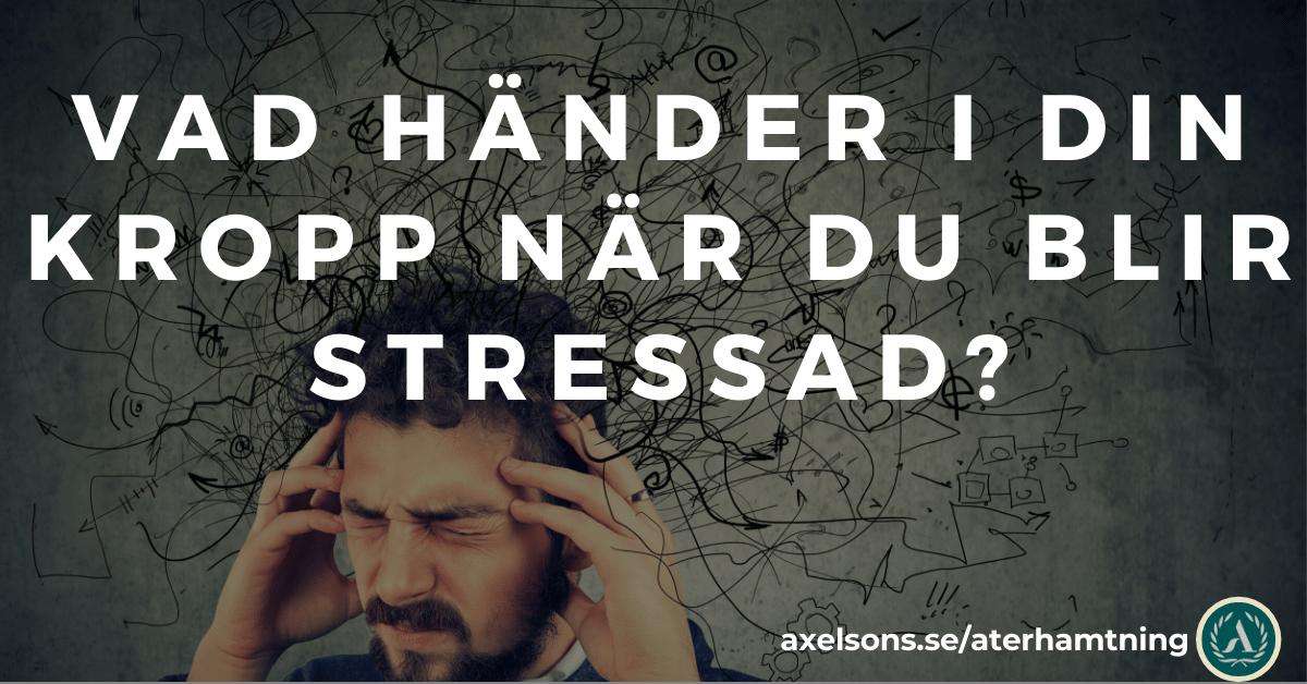 Vad händer i din kropp när du är stressad