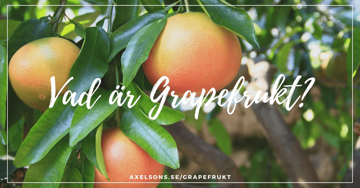 vad är grapefrukt